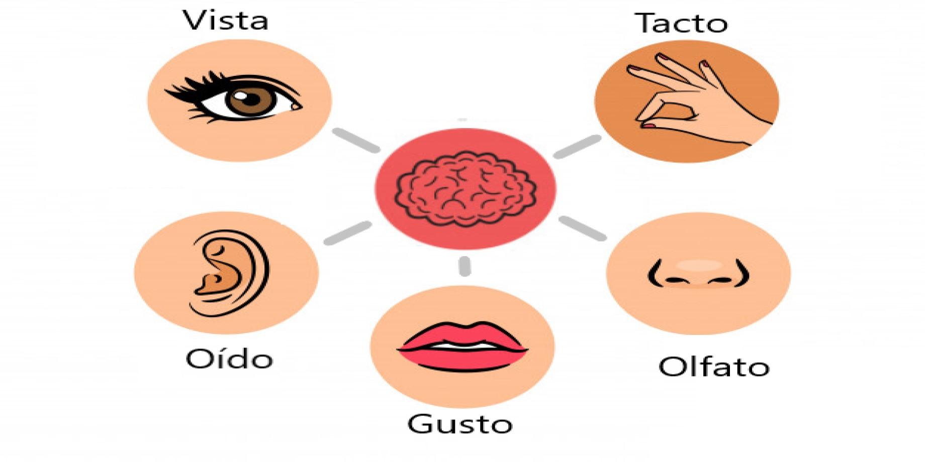 Experiencia Multisensorial de los Alimentos